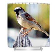 House Sparrow Shower Curtain