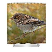 House Sparrow II Shower Curtain