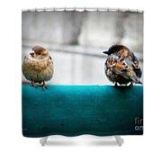 House Sparrows Shower Curtain