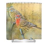 Housefinch Pair With Texture Shower Curtain