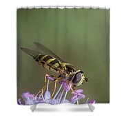 Hoverefly - Syrphus Vitripennis Shower Curtain