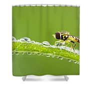 Hoverfly In Dew Shower Curtain