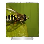 Hoverfly On A Leaf Shower Curtain
