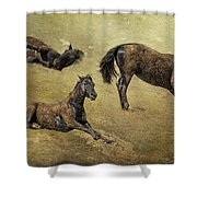 How A Black Horse Turns Brown - Pryor Mustangs Shower Curtain