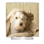 How About A Snuggle Card Shower Curtain