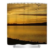 How Many Birds Can You Count? Shower Curtain