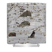 Howlin' In The New Year   #3536-signed Shower Curtain