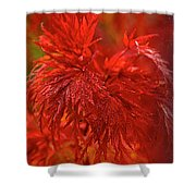 Hubble Galaxy With Red Maple Foliage Shower Curtain