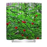 Huckleberry Bush Shower Curtain