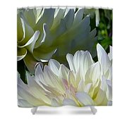 Hues Of Softness Dahlia Shower Curtain