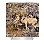 Huge Bighorn Shower Curtain