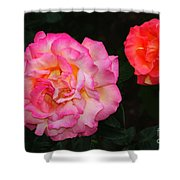 Huge Pink And White Rose...   # Shower Curtain
