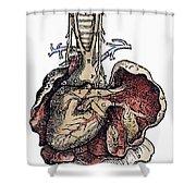Human Heart, 1543 Shower Curtain