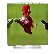 Hummer At The Hibiscus Shower Curtain