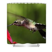 Look Hummingbird Eyelashes Shower Curtain
