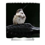 Hummer In The Rain II Shower Curtain