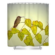 Hummer Lookout Shower Curtain