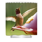 Humming Bird 2 Shower Curtain