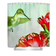 Humming Bird And Cactus Flowers Shower Curtain