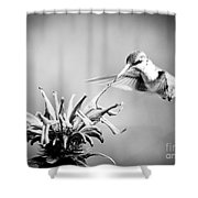 Hummingbird Black And White Shower Curtain