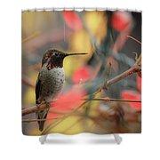 Humming Bird Christmas Shower Curtain