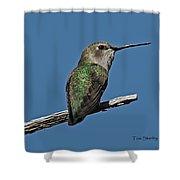 Humming Bird On A Stick Shower Curtain