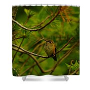 Humming Birds Perched  Shower Curtain