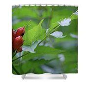 Humming Buds By Jammer Shower Curtain