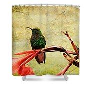 Hummingbird 1 Shower Curtain