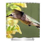 Hummingbird 3725 Shower Curtain