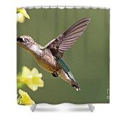 Hummingbird 3731 Shower Curtain