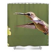 Hummingbird 3733 Shower Curtain