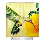 Hummingbird And California Poppy Shower Curtain