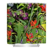 Hummingbird And Crocosmia Lucifer Shower Curtain