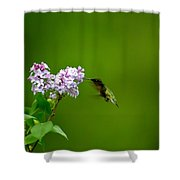 Hummingbird And Lilac Shower Curtain