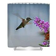 Hummingbird At Butterfly Bush Shower Curtain