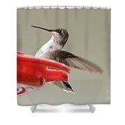 Hummingbird At The Feeder Shower Curtain