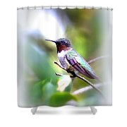Hummingbird - Beautiful Shower Curtain