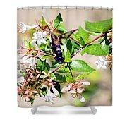 Hummingbird Clearwing Moth Shower Curtain