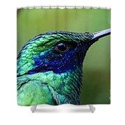 Hummingbird Closeup Shower Curtain