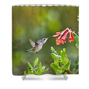 Hummingbird Dives In  Shower Curtain
