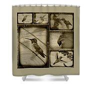 Hummingbird Family Portraits Shower Curtain