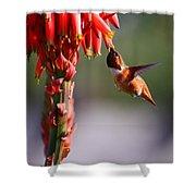 Hummingbird Feast  Shower Curtain