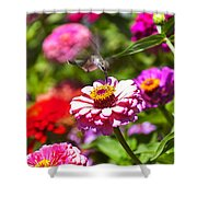Hummingbird Flight Shower Curtain by Garry Gay