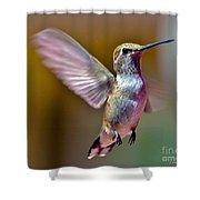 Hummingbird Frolic Shower Curtain