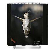Hummingbird Greeting Shower Curtain