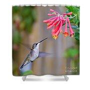 Hummingbird Happiness Shower Curtain