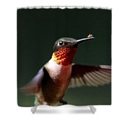 Hummingbird - Hitching A Ride - Ruby-throated Hummingbird Shower Curtain