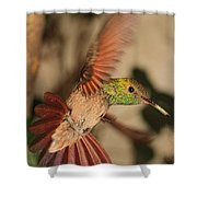 Hummingbird I Shower Curtain