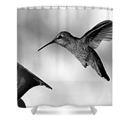 Hummingbird In Black And White Shower Curtain